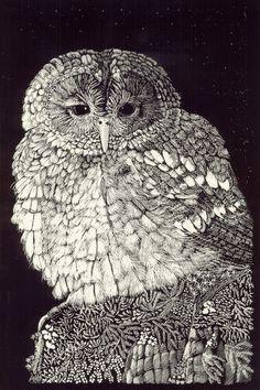 Little Owl Fine Art Print from original Scraperboard (or Scratchboard)