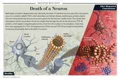"""Death of a Neuron: Brain injury can lead to degeneration and, ultimately, the death of individual neurons years after concussions occur. [Illustration by Emily Cooper; for """"The Collision Syndrome"""" by Jeffrey Bartholet, Scientific American, February 2012]"""