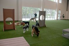 -Repinned- Doggie daycare business inspiration & ideas from around the web. Unleashed Indoor Dog Park, Dallas.