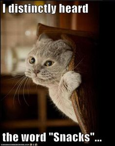 funny animals, treat bags, funny pictures, funny cats, pet