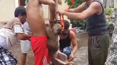 ✦VIETNAM:THE MOST BARBARIC PLACE ON EARTH FOR DOGS✦