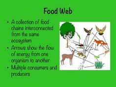 Food Chains and Food Webs - Free powerpoint presentation