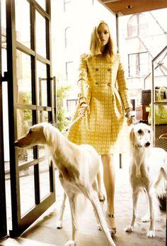 yellow coat! vogue, anim, fashion, dogs, style, steven meisel, gemma ward, yellow, coats