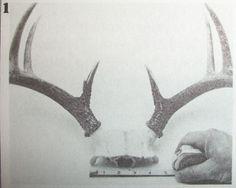 DIY Antler Skull-Cap Mount