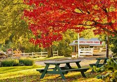 Apple Hill in the Fall - I love that this is already on Pinterest :)