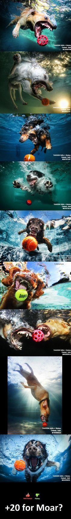Dogs underwater! hahaha