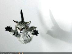 Superkitten!