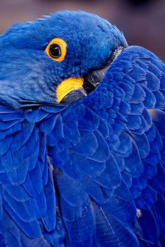 Blue bird of happiness...