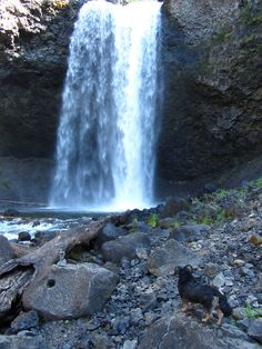 Chili the Hiking Dog paw2:  Moul Falls Hike  Wells Gray Provincial Park  1 paw up