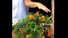 WATCH: Jobe's Container Throwdown. Fertilizer is one of the most often overlooked elements factoring into success in the garden. Top gardeners understand that healthy soil leads to healthy plants. #g2b14