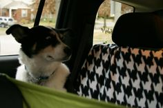 "Tutorial For Dog Car Seat Covers - The dog's face lol! ""What is this witchcraft, I can't get in the front seat?!"""
