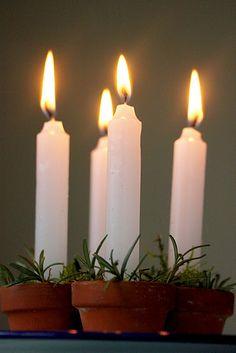What a lovely way to display candles..i can smell those Rosemary sprigs already