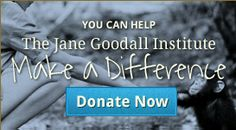 You Can Make  A Difference -- Donate Now