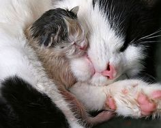 Mother & kitten