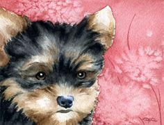 YORKSHIRE TERRIER Puppy Dog Art Print Signed by by k9artgallery