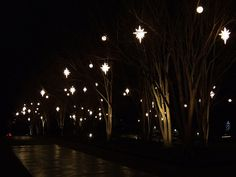 Crepe Myrtle Grove during Holiday Lights at Daniel Stowe Botanical Garden