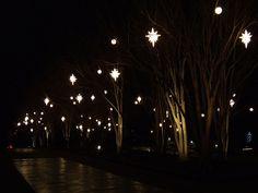 botan garden, holiday lights, holiday imag, crepe myrtl, botanical gardens