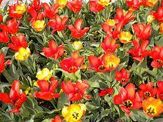 Missouri Botannical Garden in the spring