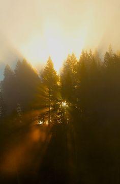 lights, artworks, tree, morning light, pin, sunris, forest, sun flare, sun rays