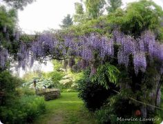 plant, tree, gardens, place, flower