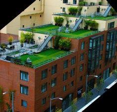 urban roof top gardens