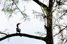 Pics from a short family drive through the Everglades. Cormorant