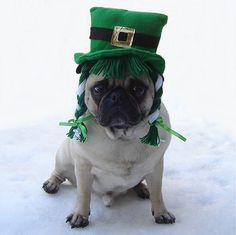 Funny Pug St. Patrick's Day Costume