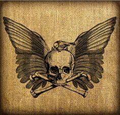 bird, skull