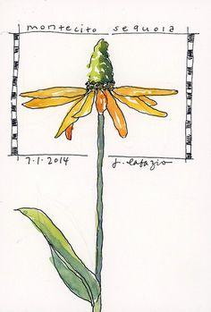 cone flower by janelafazio, via Flickr