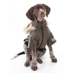Barbour type styling for dogs