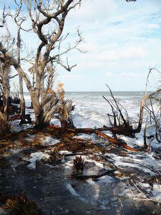 Botany Bay - Edisto Island, SC