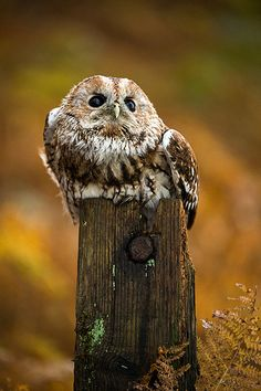 Owl by Dave Hunt Photography