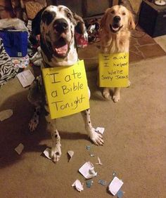 Dog shaming is always a classic