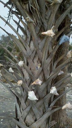 shells, shells, shells ...  Botany Bay in Edisto island, SC