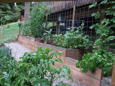 A terraced backyard vegetable garden by The Dirt Diva.