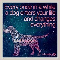 So true #lab #love #dogs