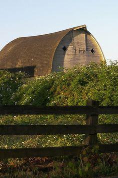 Barn & Blackberries; Snohomish, Washington