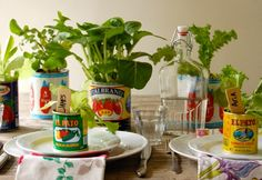 """Plant your herbs, vegetables and other """"farm to table""""  plants in your favorite jars and containers of all types, shapes and sizes.  Just allow for good drainage and as much sun exposure as possible!  Did you know: Your grocery store is an excellent place to search for your next planters!"""