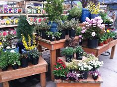 Looking good!  Al's Garden Center in Gresham, Oregon