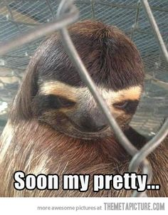 Creepy Sloth strikes again… This is freaking me the hell out!