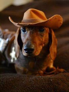 Get-a-long little doggie!