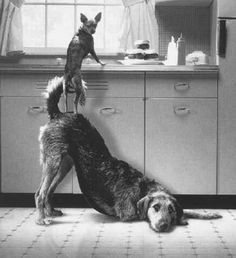 Writing Prompt: You walk in the kitchen and find this! You don't own any pets. How did they get there? What happens next?