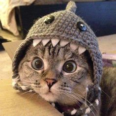 Cute! kitten, funny hats, cats in clothes, shark week
