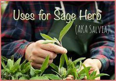 Natural Uses For Sage Herb (AKA Salvia Plant)