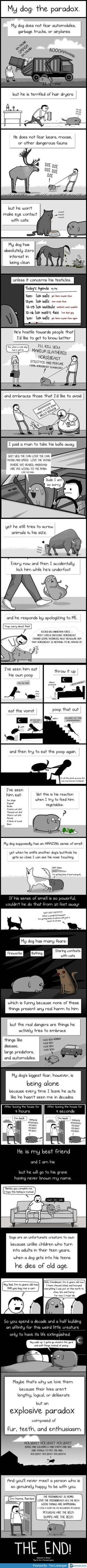 Dog paradox- this had me in tears laughing!