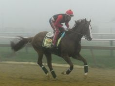 California Chrome gallops through the fog at Pimlico on the Thursday morning before the @Brenda Franklin Vice Stakes