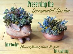 Preserving the Ornamental Garden - How to dry flowers leaves stems and pods for crafting