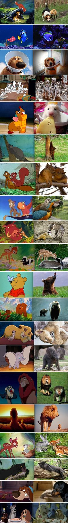 disney movies, animals, real life, the real, disney couples, art, childhood, lions, disney characters