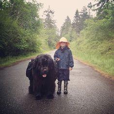 newfoundland dog ( by northwestmommy via mymodernmet)