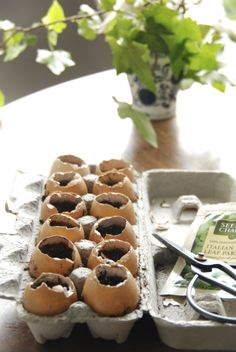 Eggshells with soil and seeds, to give as a gift!